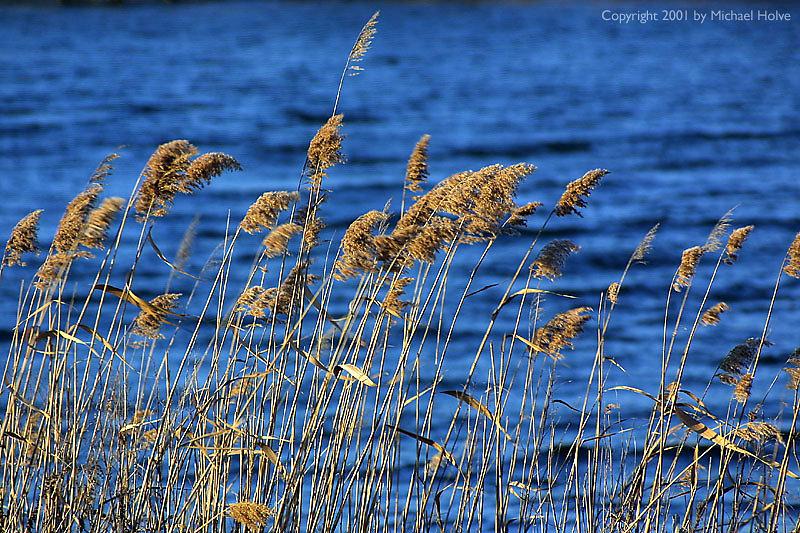 grass-by-water-01.jpg