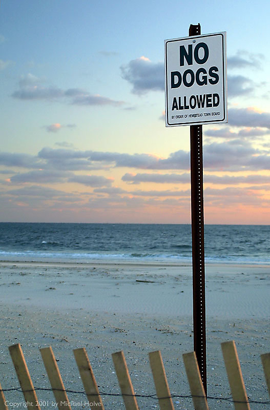 no-sunset-for-dogs-01.jpg