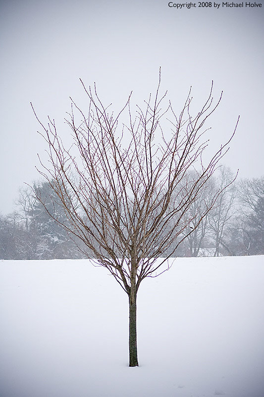 December Storm 2008