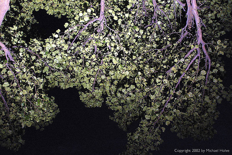 scary-tree.jpg