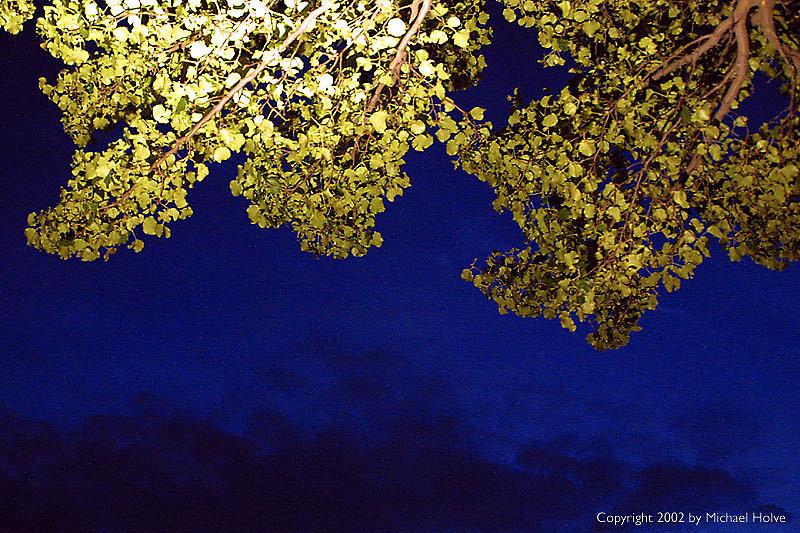 tree-overhang.jpg
